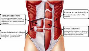 do you breathe correctly? the role of the diaphragm muscle in core, Human body